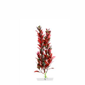 JK Akvarijná rastlina Red Ludwigia 18-21 cm
