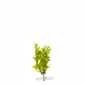 JK Akvarijná rastlina Hygrophila 13-16 cm