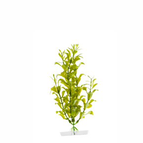 JK Akvarijná rastlina Hygrophila 18-21 cm