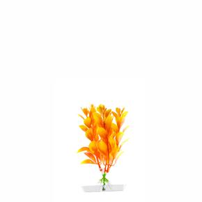 JK Akvarijná rastlina Orange Ludwigia 13-16 cm