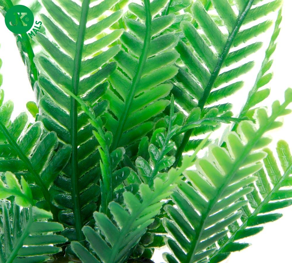 JK ANIMALS Akvarijná rastlinka Papradie mini | © copyright jk animals, všetky práva vyhradené