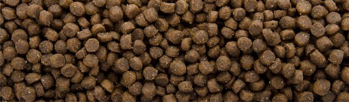 Sam's Field Cat Kitten, superprémiové granule – kompletné krmivo pre mačiatka